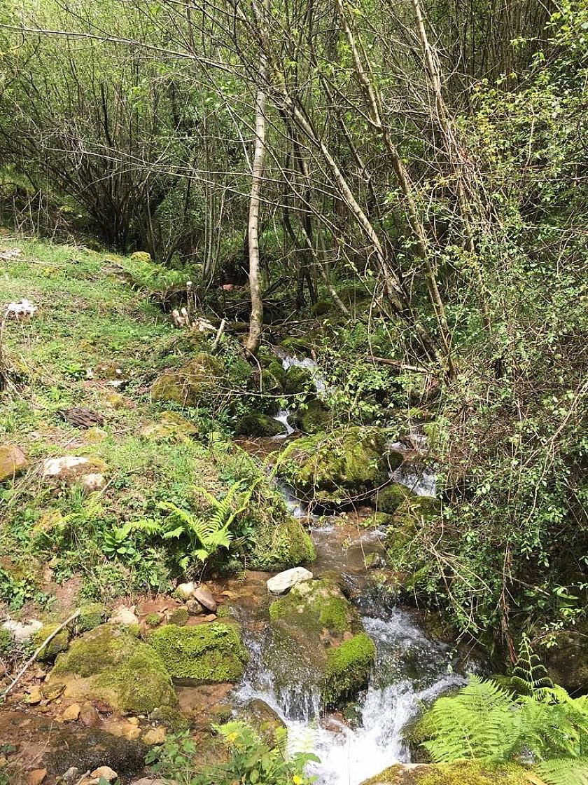 Fuentes agua natural en la Finca de Corrales de Buena.