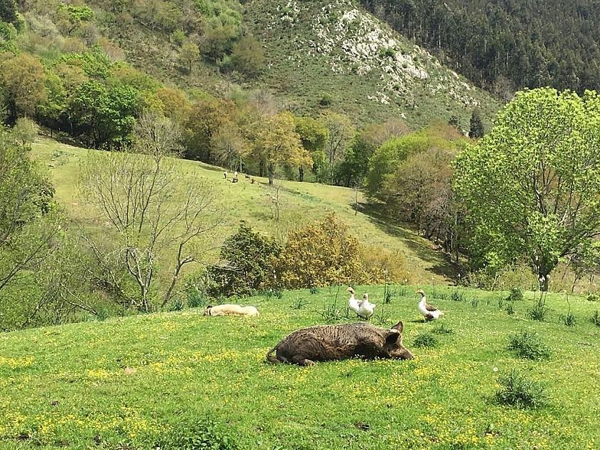 Animales salvajes en Finca Corrales de Buelna.