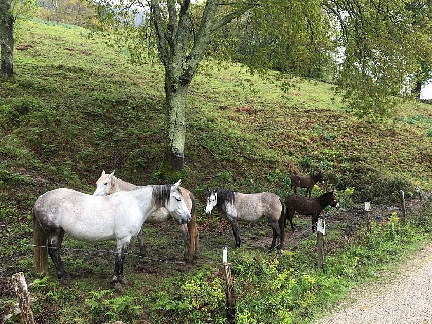 Caballos en Parque Natural de Saja-Besaya.