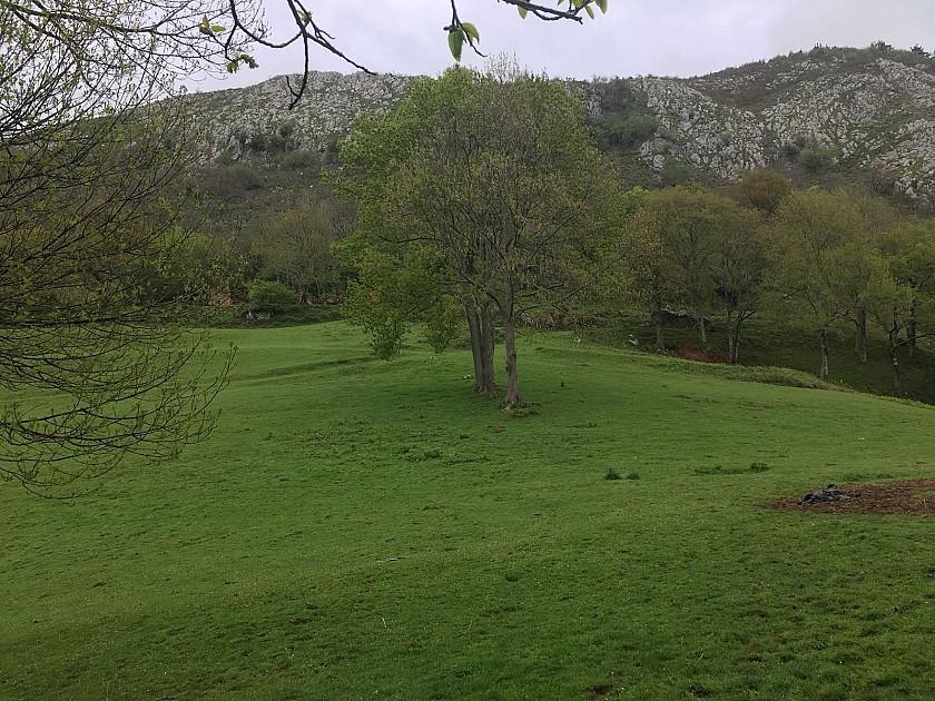 Plantación autóctona de Cantabria.