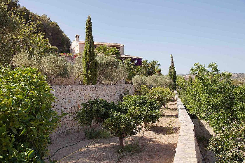 Huerto de frutales en villa de lujo. Benissa