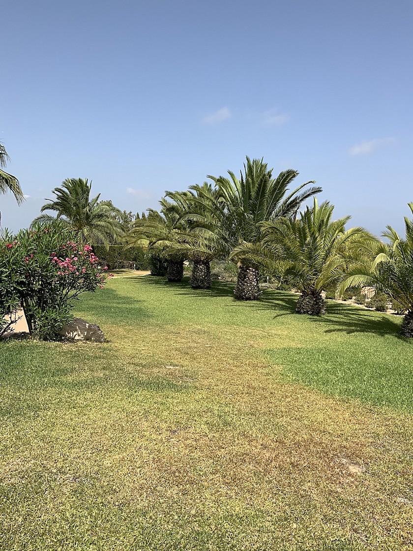 Jardín con plantas autóctonas en Benissa